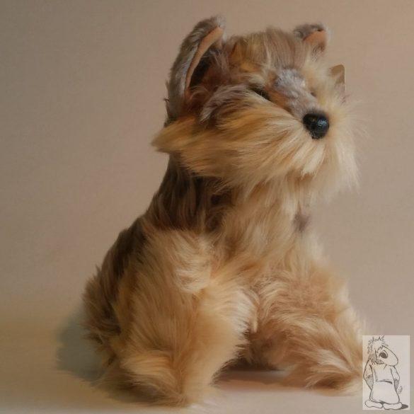 Üllő Schnauzer kutya